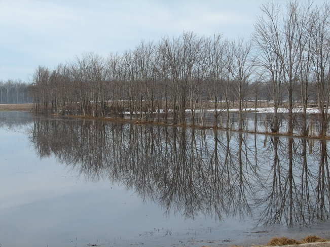Perfect reflection in flooded field Listowel, Ontario Canada