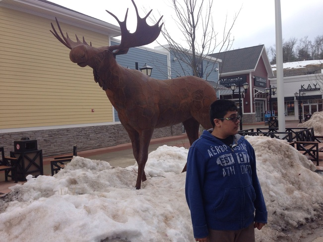 frozen moose Nashua, New Hampshire United States