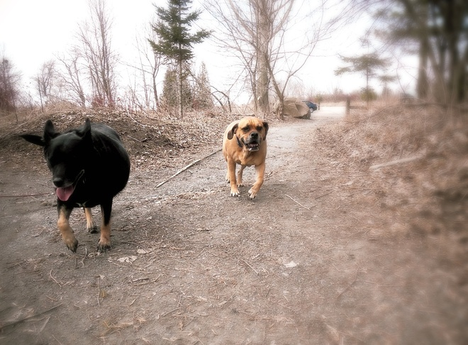 Andy and Rocco loving the Spring! Port Hope, Ontario Canada