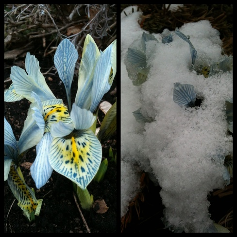 Yesterday and Today Burlington, Ontario Canada