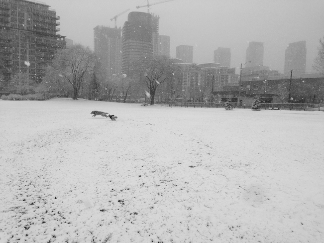 dogs don't mind April snow Toronto, Ontario Canada