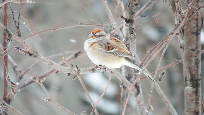 Sparrow Corbeil, Ontario Canada