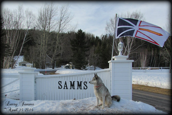 """Sitting On Guard For Me"" Springdale, Newfoundland and Labrador Canada"