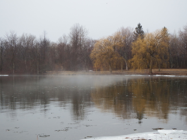 misty pics Long Sault, Ontario Canada