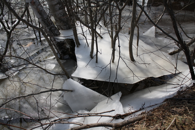 waterline receding leaving ice tables throughout the forest. Mont-Tremblant, Quebec Canada