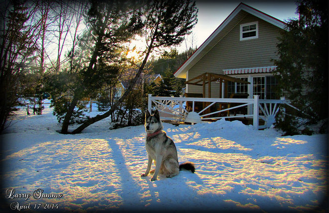 """Leka Posing For Treats"" Springdale, Newfoundland and Labrador Canada"