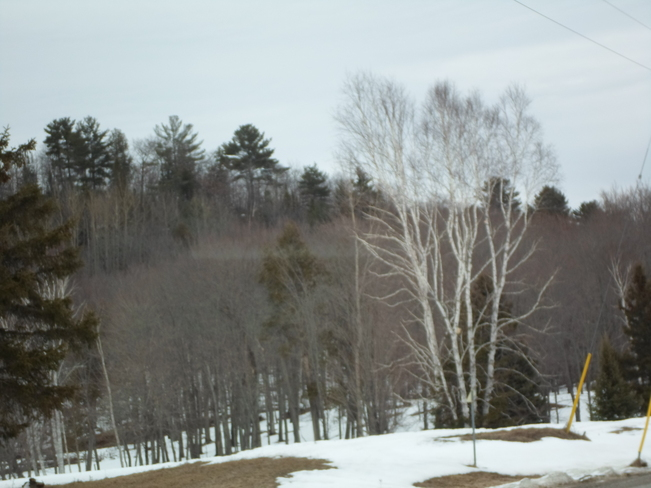 The trees at Sherriff's Creek looked nice Elliot Lake, Ontario Canada