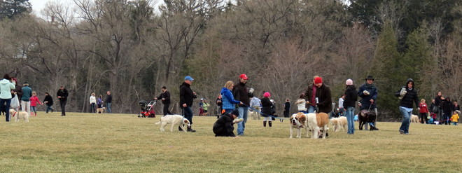 Easter egg hunt service dogs Guelph, Ontario Canada