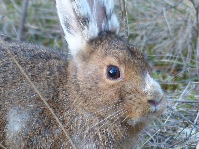 E bunny Grand Forks, British Columbia Canada