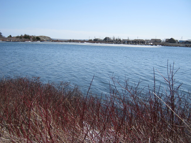Last of ice on Northern Cove Pond