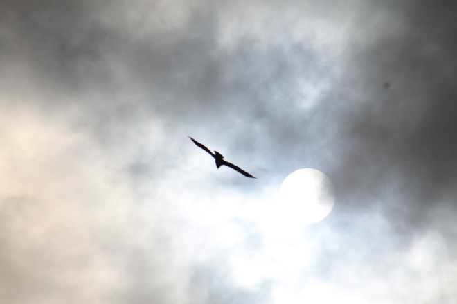 the eagle the clouds and the sun Abbotsford, British Columbia Canada