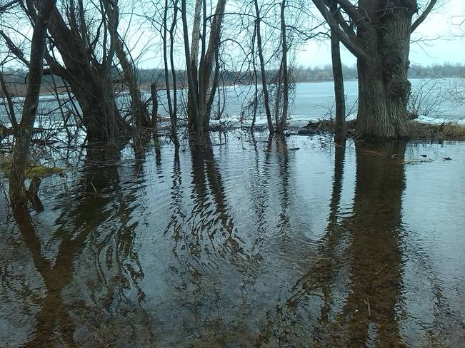 Flooded lake shore on lake scugog Port Perry, Ontario Canada