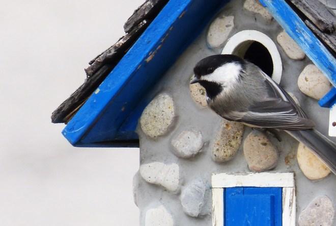 Time to nest! Ottawa, Ontario Canada
