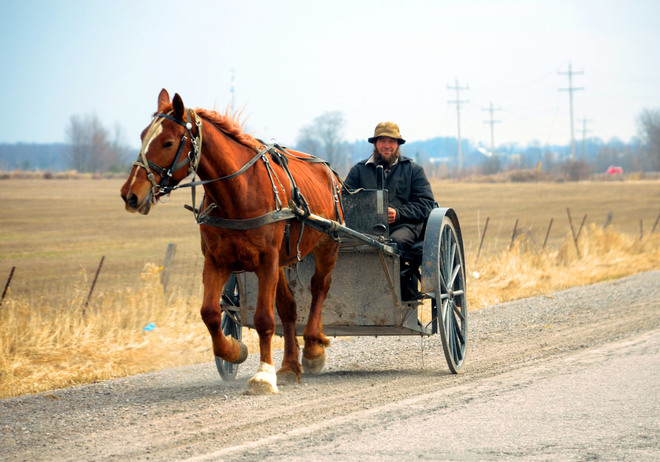 A beautiful day to take the horse and buggy out Scarborough, Ontario Canada