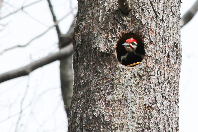 Any Lady Woodpeckers out There? Kingston, Ontario Canada