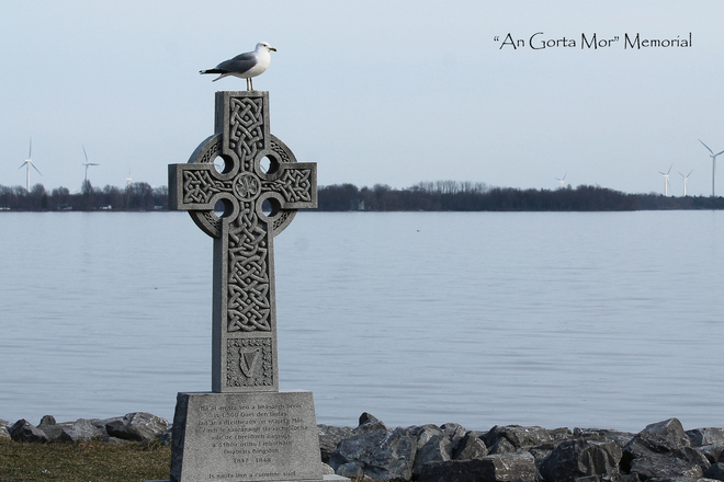 Ring-Billed Seagull watches over Memorial Kingston, Ontario Canada