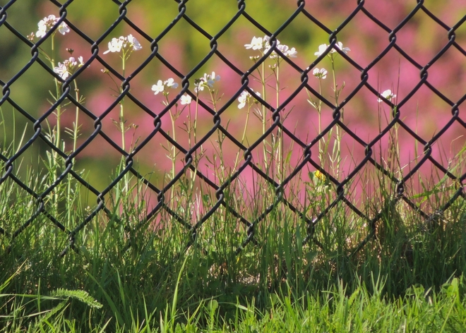 Centerfield Fence At Ballpark New Westminster, British Columbia Canada