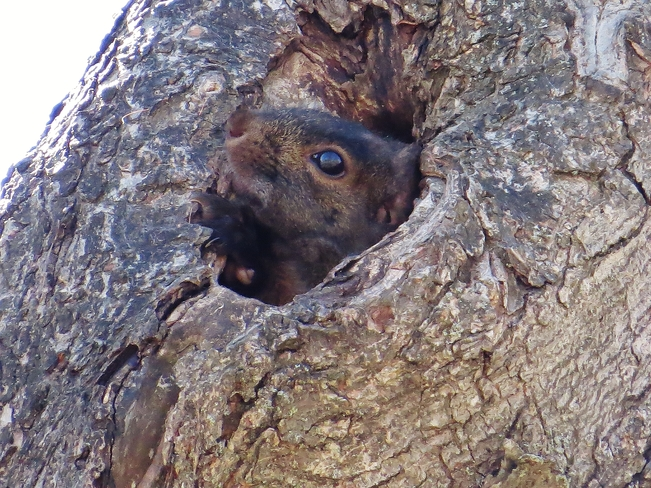 Psst, you see a crabby Squirrel anywhere? North Bay, Ontario Canada