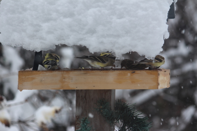 Don't Forget To Feed Your Feathered Friends Thunder Bay, Ontario Canada