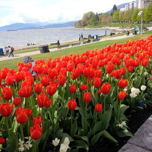Spring at English Bay Vancouver, British Columbia Canada