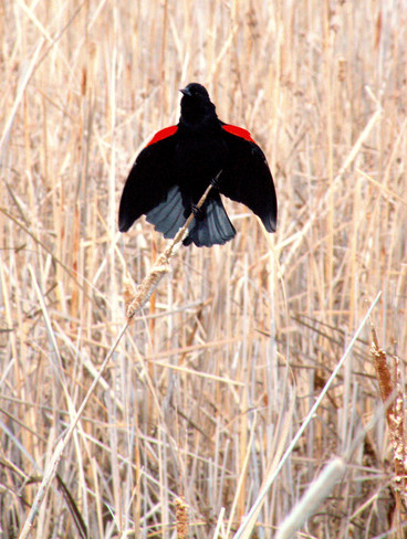 Stretch Those Wings Leamington, Ontario Canada