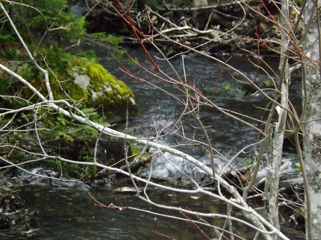 mountain stream New Minas, Nova Scotia Canada