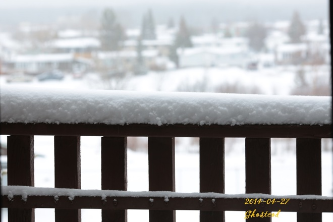 Wet snow and too much of it! Swan Hills, Alberta Canada