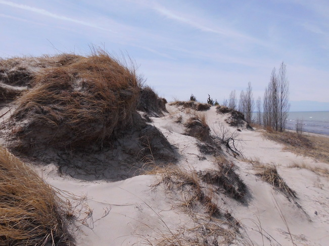 Dunes at the Pinery Park Grand Bend, Ontario Canada