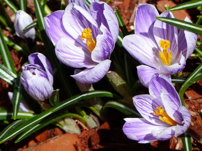 Spring Delight Okotoks, Alberta Canada