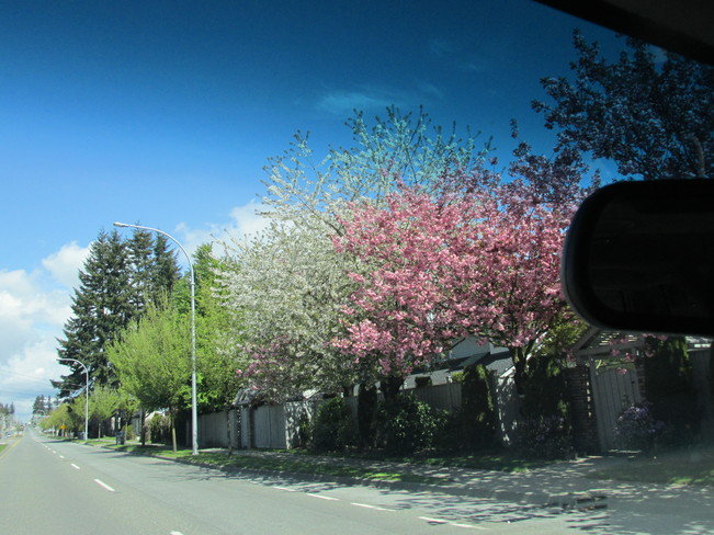 blossoms Surrey, British Columbia Canada