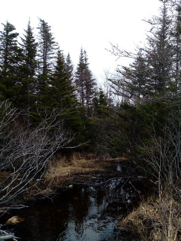 Gentle Creek In Spring Conception Bay South, Newfoundland and Labrador Canada