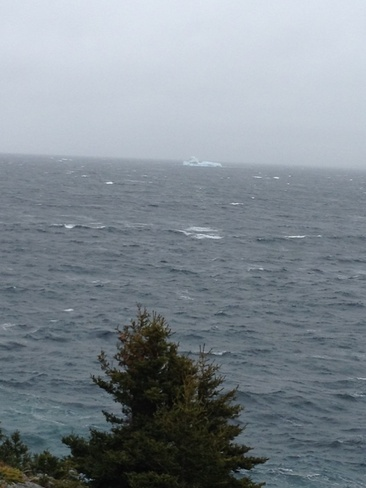 Ice berg in harbour main Harbour Main-Chapel Cove-Lakeview, Newfoundland and Labrador Canada