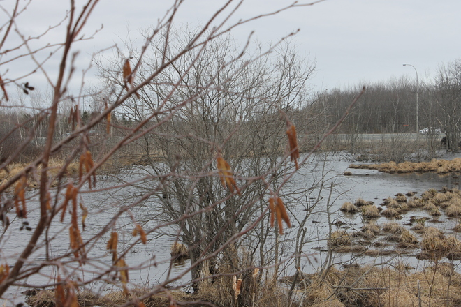 Miramichi Marsh Miramichi, New Brunswick Canada