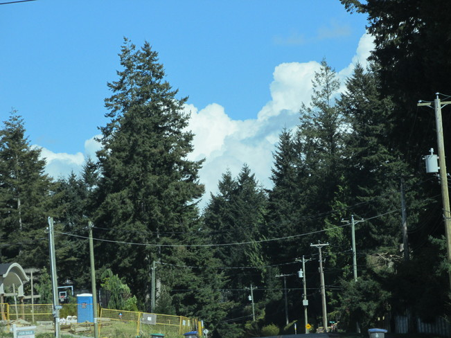 above the trees Surrey, British Columbia Canada
