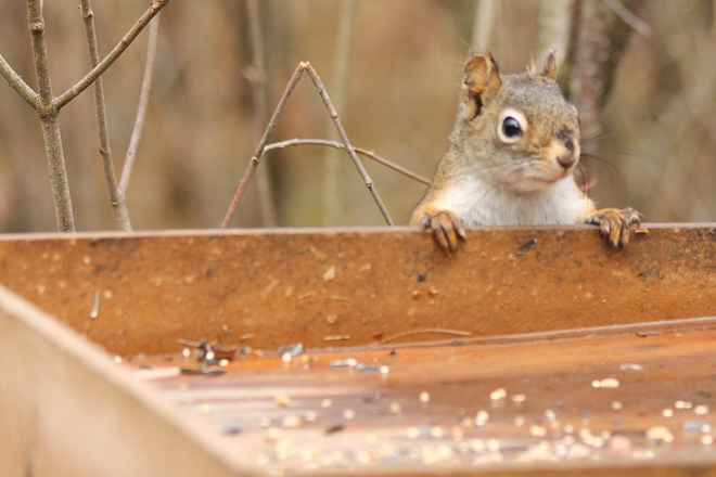 Hmm... Any Sunflower Seeds Here Today?? Kingston, Ontario Canada