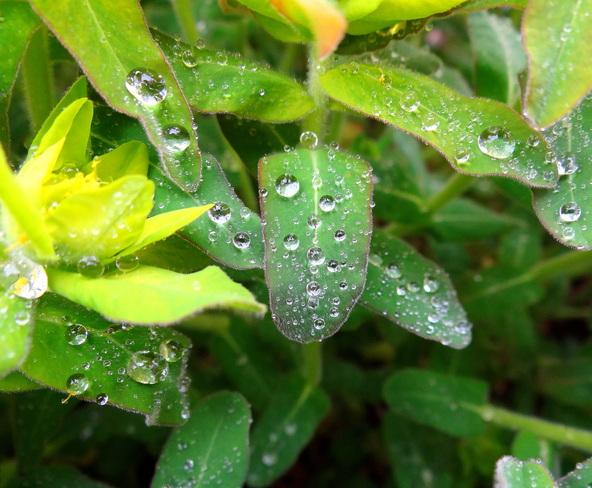 Rain dropletes Royston, British Columbia Canada