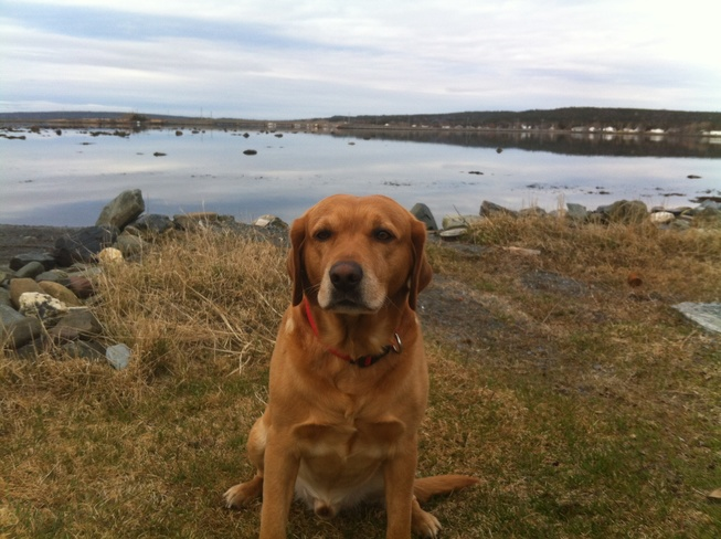 Tayzie's Early Morning Gander, Newfoundland and Labrador Canada