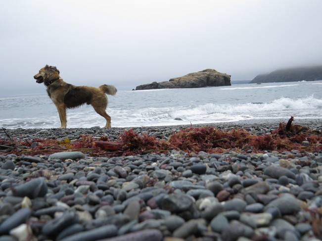 walking with the dog Rock Harbour, Newfoundland and Labrador Canada