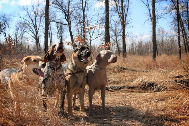 Pack of Dogs Windsor, Ontario Canada