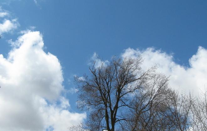 Candy cotton clouds Arthur, Ontario Canada