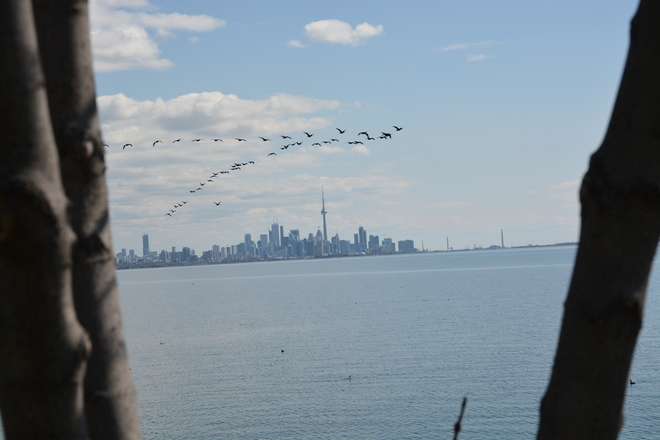 Geese enjoyed todays weather as well !!