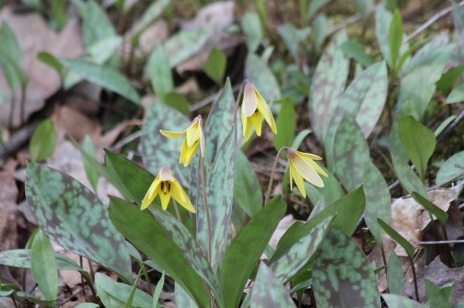 wildflowers St. Thomas, Ontario Canada
