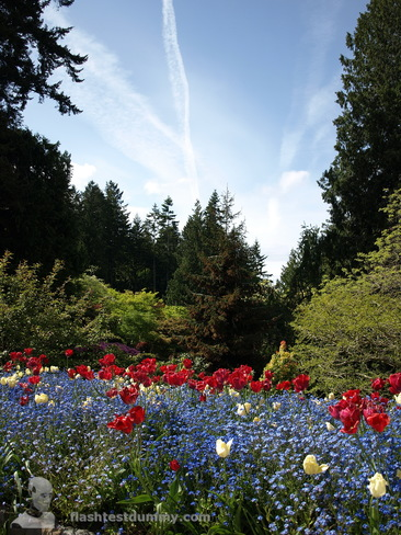 Flowers, trees and sky. Brentwood Bay, British Columbia Canada