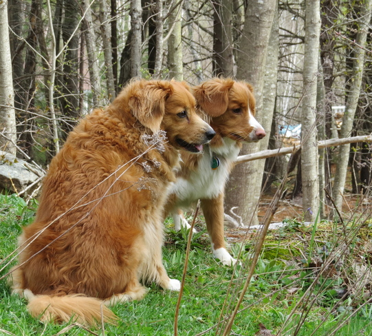 Tollers Bath, Maine United States