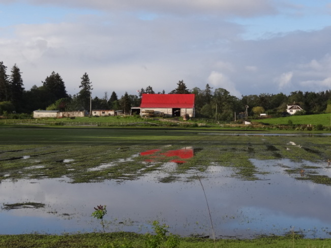 RED ROOFED BARN IN THE SUN Victoria, British Columbia Canada