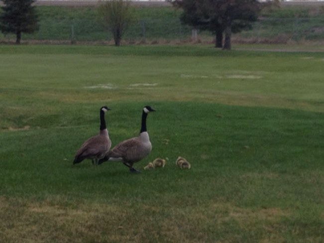 Mama & Papa with new babies Medicine Hat, Alberta Canada