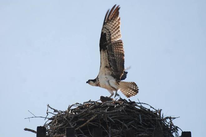bird Penticton, British Columbia Canada