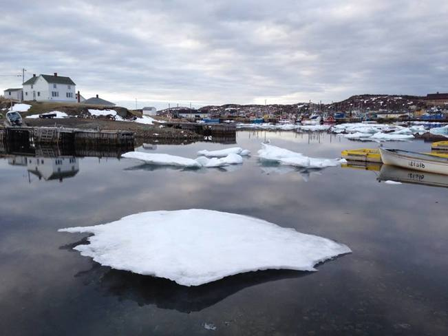 Ice in the Tickle! Twillingate, Newfoundland and Labrador Canada