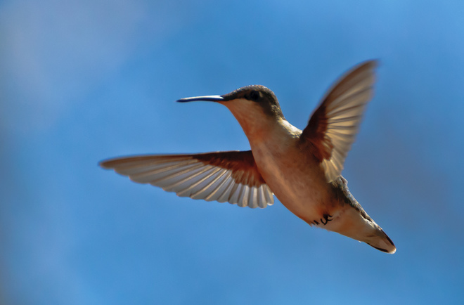 And the Hummingbirds are back too.... Bayfield, Ontario Canada