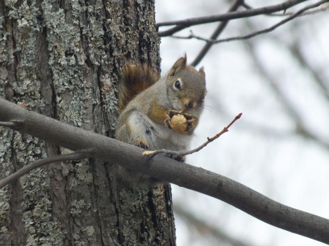 Squirrel & His Nut